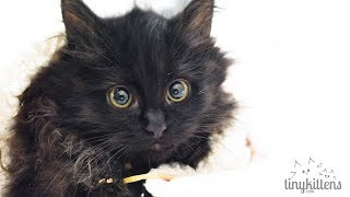 LIVE: Rescued pregnant feral cat + kittens - TinyKittens.com