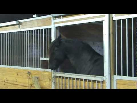 Amazing Houdini Horse can get out of any enclosure
