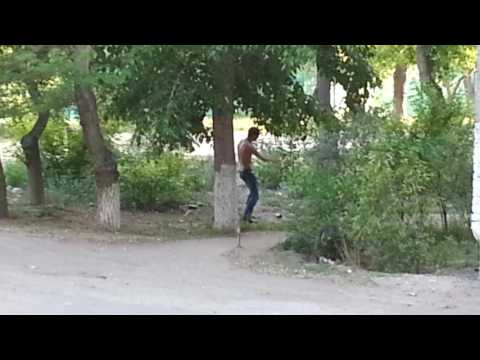 Павлодар нашествие мошки