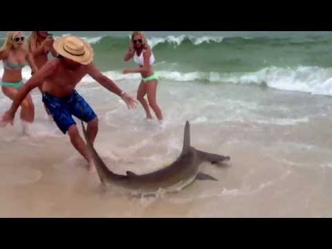 hammerhead-shark-in-gulf-shores.html