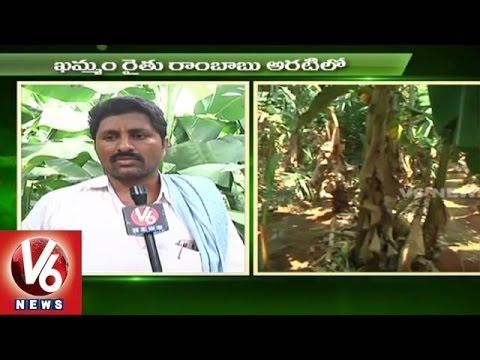 Sagubadi | Banana Farming Techniques | Horticulture Crop - V6 News