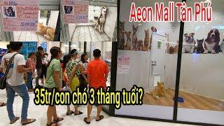 Chuyện lạ: Siêu thị đầu tiên tại Việt Nam Bán Chó cưng giá 35 triệu/con ở AEON Mall Tân Phú