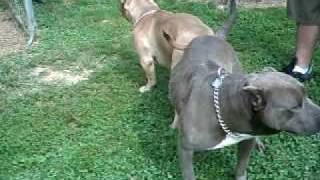 Watch Larry Razors Edge video