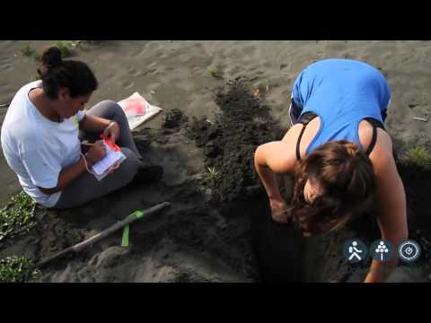 Walking Tree Travel⎪Costa Rica Sea Turtle Conservation 2012