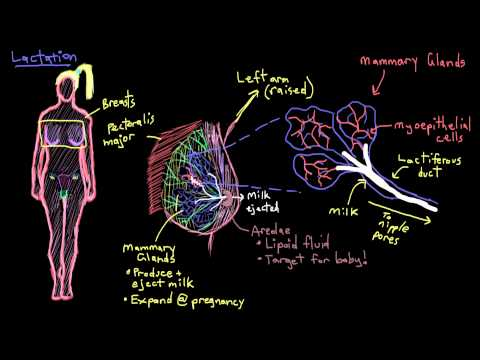 Khan Academy - Breast Anatomy And Lactation video