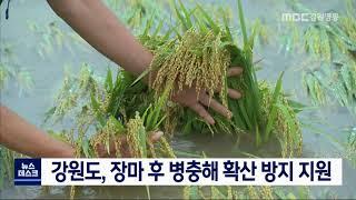 도 예비비 긴급 지원, 집중호우 피해농작물 긴급방제