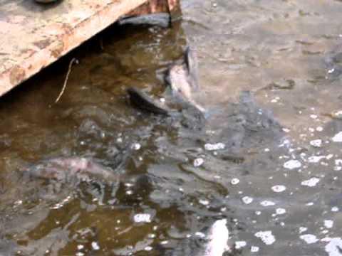 рыбалка на бектыше