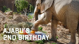 Baby Elephant Ajabu's 2nd Birthday