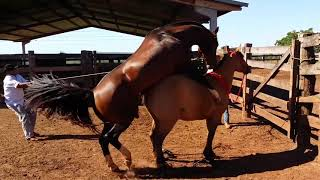 Horse Mating and Donkey Mating | Animals World Videos Top 10 2019