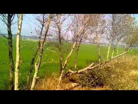 Yo Yo Hanny Singh-part 1   [ 9872104019] video