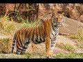 Zoo Animals : How Do Many animals Travel ?