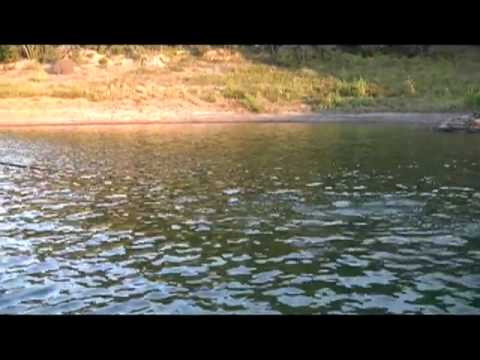 Striper Fishing Lake Cumberland - Team Lawless