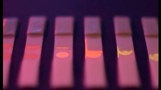 Photoluminescent paper-based sensor for pathogens using graphene oxide
