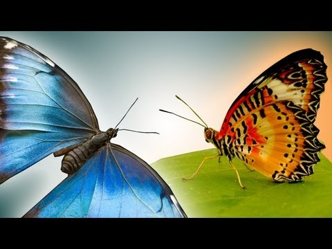 Butterfly in epic slow motion - Slo Mo #22 - Earth Unplugged