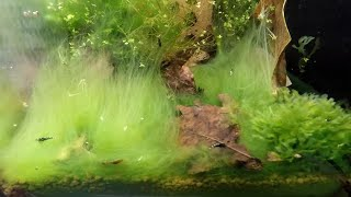 2019 How To  Annihilate Algae In The Aquarium - Remove The Cause