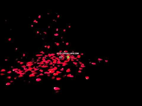 Rose Petals Falling video