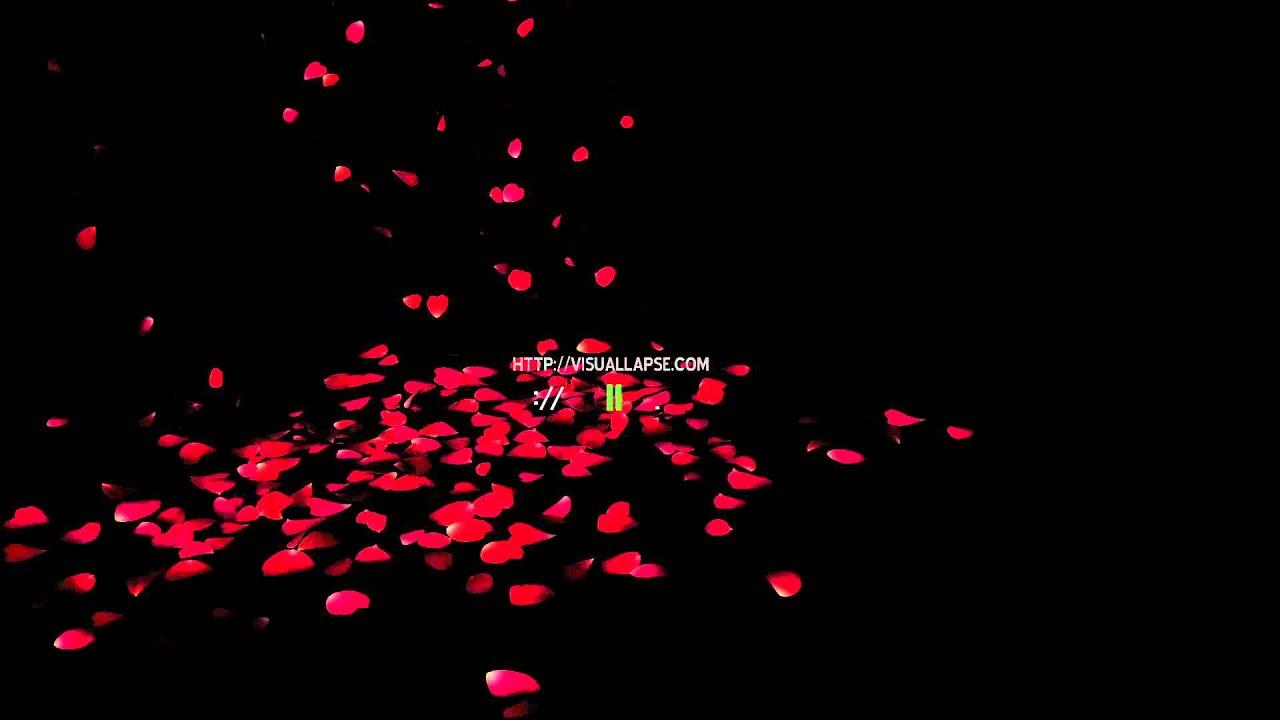 Black Blowing Flowers Human Glow