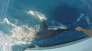 Catalina Island Marlin Fishing