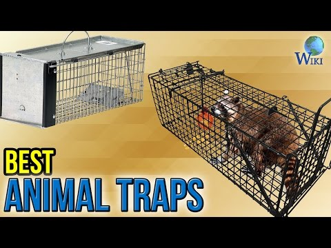 8 Best Animal Traps 2017