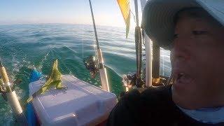 Saving An Iguana Four Miles Offshore by : Key West Kayak Fishing