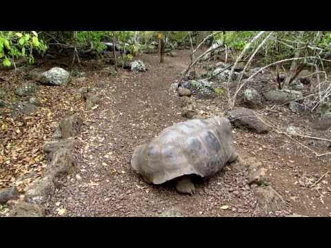 Giant turtle bites Finnish tourist at Galapagos