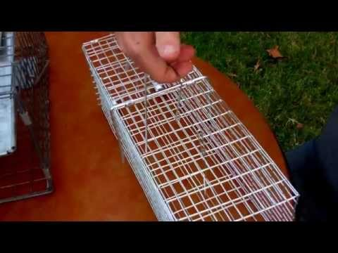 small animal traps for prepping which one to pick