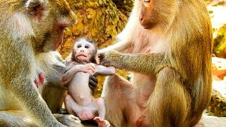 Absolutely, Pigtail Monkey Will Be A Good Care Taker Of New Baby Janet, Always See Being Close