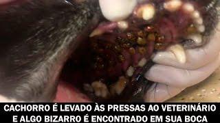 Olha o que foi encontrado na boca do cachorro