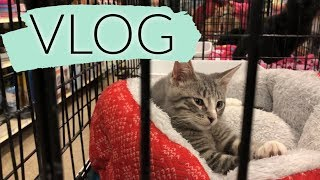WE ADOPTED A CAT! 🐱  | Working Mom Weekly Prep