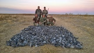 South Africa Dove Hunting May 14
