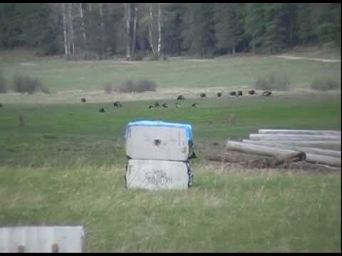Dan Evans of Trophy Taker. Long range shooting. 3 arrows @ 180 yds.avi