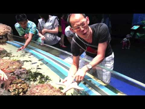 Feeling fishy at the SEA Aquarium at Resorts World Sentosa Singapore!