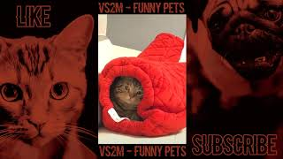 The Best Of Tik Tok Pets Funny Animals #29