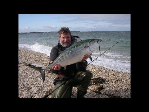 Surf Fishing for False Albacore