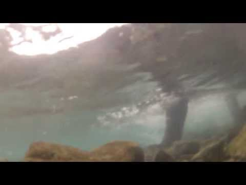 Filming Grizzlies Fishing Underwater with GOPROS! GoPro HD