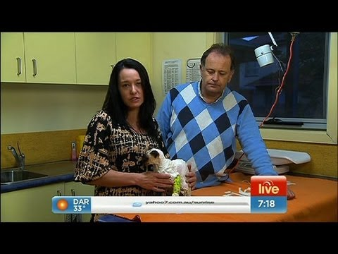 Sunrise - Shocking case of animal cruelty