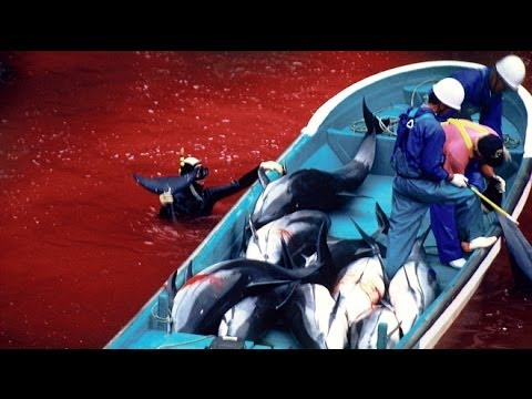 Japan Dolphin Slaughter Turns Sea Red, Anonymous Strikes Back