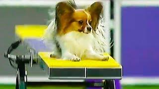 Ozzy Man Reviews: Quickest Dog Ever