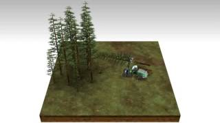 Ecological Cycle 01  Sustainable Forestry