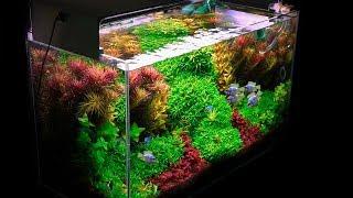 Planted Tank | My Basics for Successful Planted Aquarium Set Up
