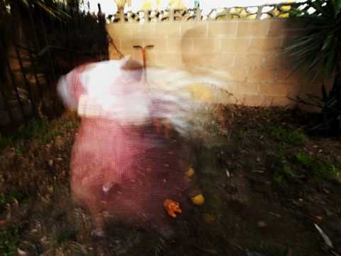 Danger Mouse And Sparklehorse - Just War