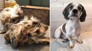 'Horribly neglected' dog gets remarkable transformation