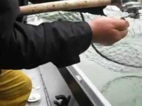 Klamath River Spring Salmon 2012 - Salmonslayer