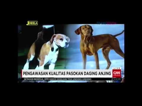 Jakarta Animal Aid Network, Benvika