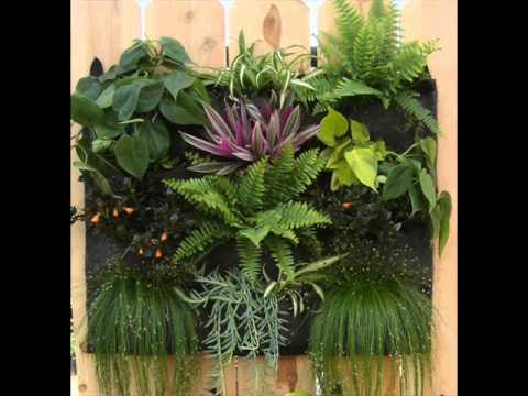 tidak ada alasan utntuk tidak menanam berbagai sayuran di pekarangan