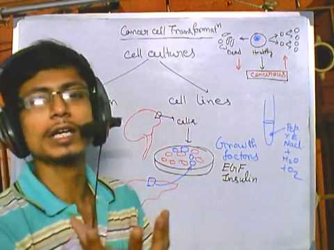 Cancer biology part 4 cell strain and cell line