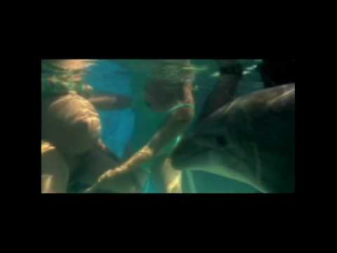 Amazing Video Of Underwater Childbirth With Dolphin.qt video