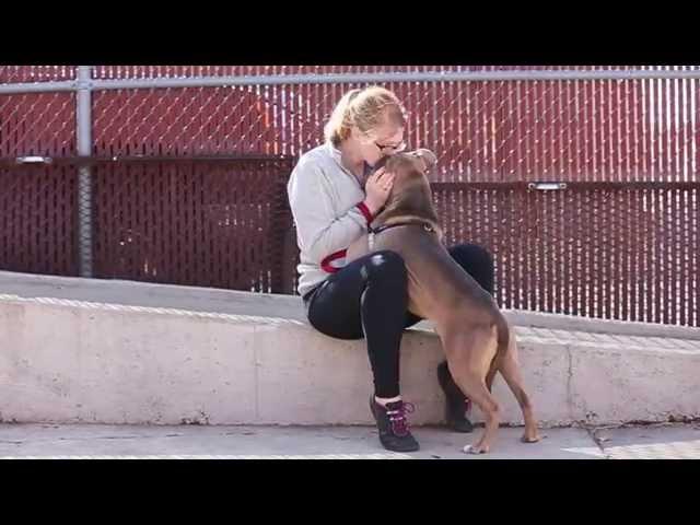 Adopt Buddah - Animal Rescue Dog in St. Louis   Gateway Pet Guardians
