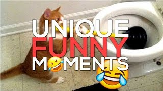 Funniest Animals Ever 😂 Funny Dogs & Cats 2019 Live Stream 24/7