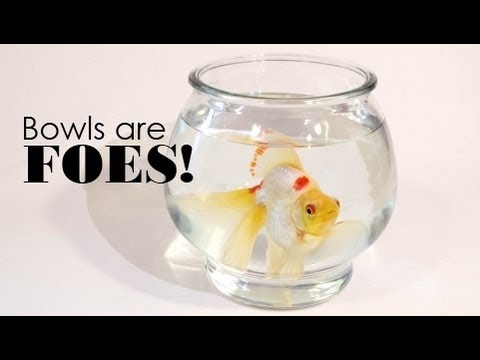 Fish Bowls Are FOES YouTube